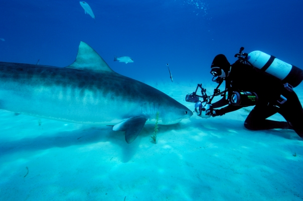 Tiger Shark and Brian Skerry